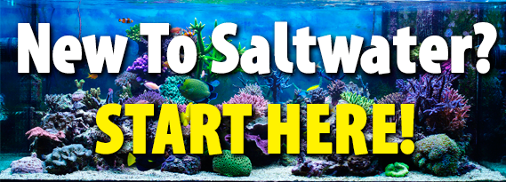 New to saltwater